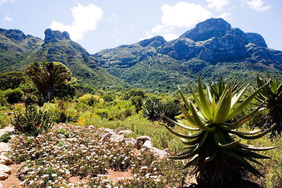 Kirstenbosch National Botanical Garden in Cape Town, South Africa